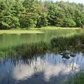 写真: 公園の池に亀?