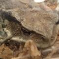 写真: 蛙の顔