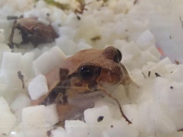 写真: 蛙 2