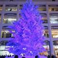 写真: 白いツリー