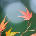 写真: 新宿の秋