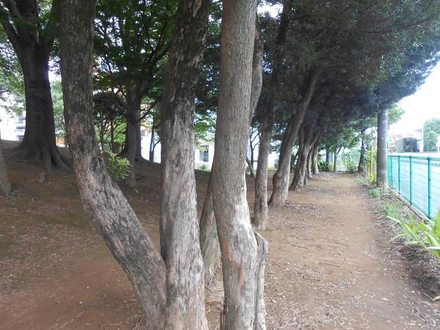 越谷 第一公園