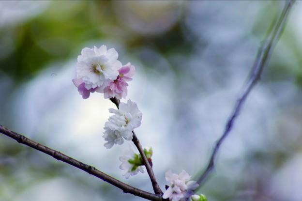 141203 徳川園 - 010
