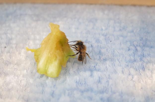 ハチ、目覚める