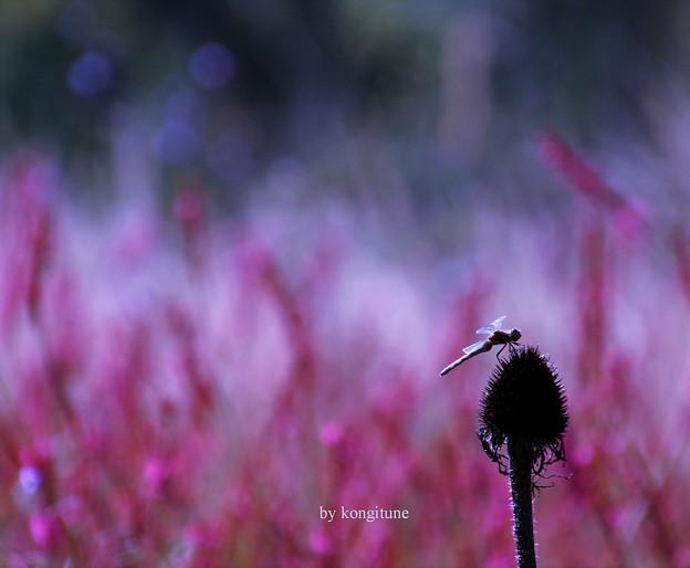 写真: 秋を想う