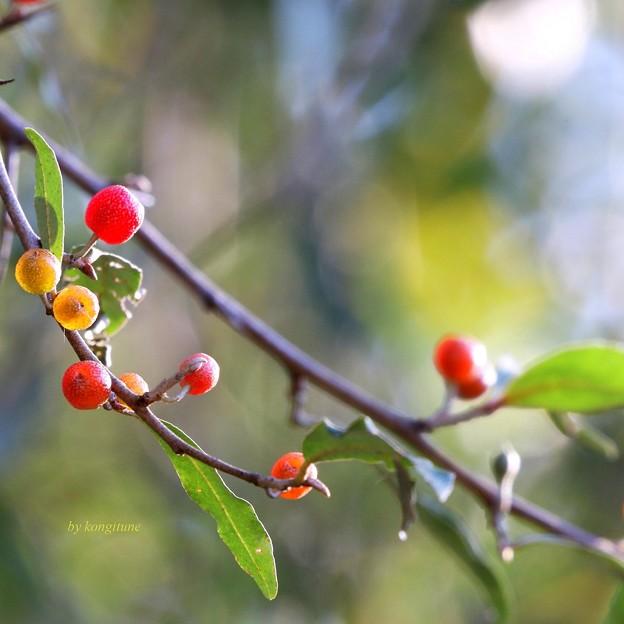 秋ぐみの季節