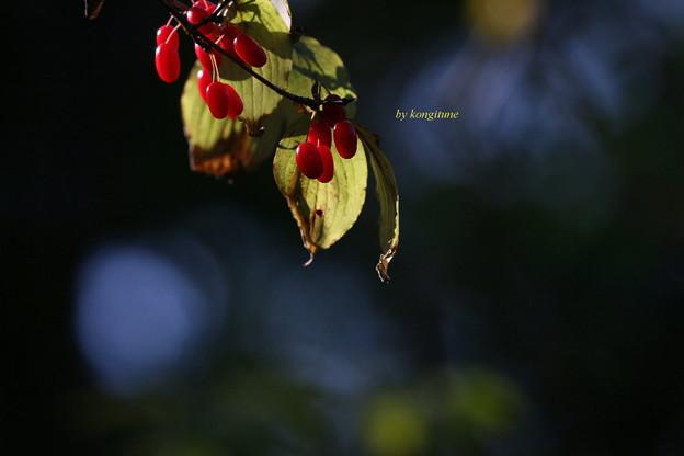 写真: 秋さんご