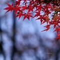 Photos: 晩秋