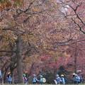 写真: 秋に包まれて