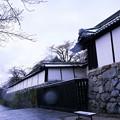 写真: 滋賀院門跡(雪の日に)