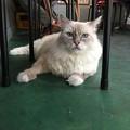 Photos: 2017/10/08 猫の居る居酒屋「おる商店」