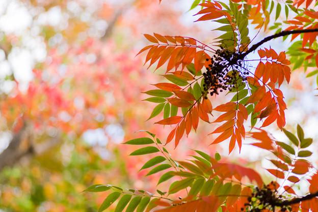 透きとおる秋