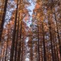写真: 燃える秋の世界4