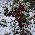 12月24日「自然のツリー」