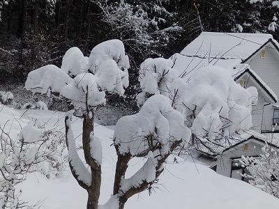 1月13日「楓に雪」