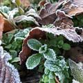 写真: 冬が来る