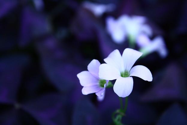 凛と咲く花.
