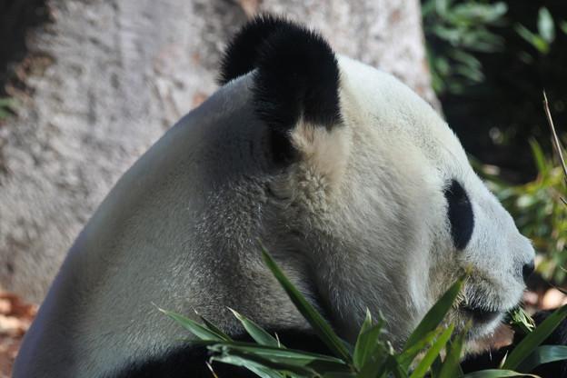 20171213上野動物園NO.5