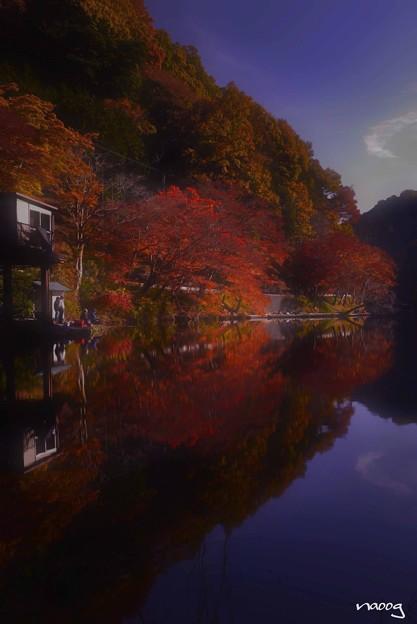 写真: 濃紅葉