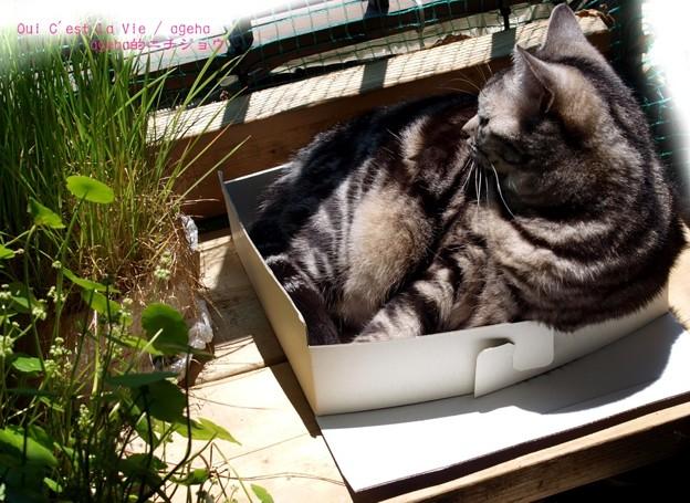 その箱ぎゅうぎゅうですね。