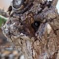 Photos: 越冬テントウムシ。