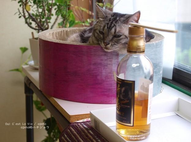 Photos: この酒瓶はにゃにかにゃ。(ナガサキアゲハ羽化)