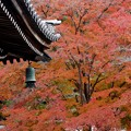 写真: 南禅寺、