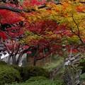 写真: 平安神宮栖鳳池