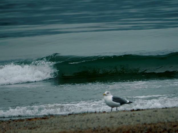 波とカモメ