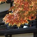 川越 喜多院の紅葉 18