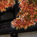 川越 喜多院の紅葉 19