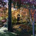 川越 喜多院の紅葉 22