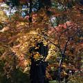 川越 喜多院の紅葉 23