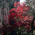 川越 喜多院の紅葉 26