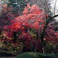 川越 喜多院の紅葉 27