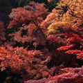 川越 喜多院の紅葉 33