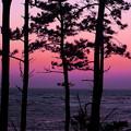松林の夕景