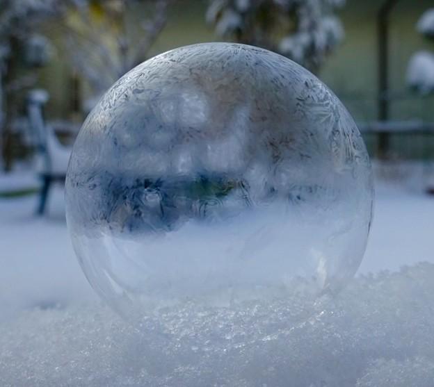 Photos: 霜の玉