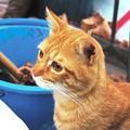 写真: 2008年11月24日のボクチン(4歳)