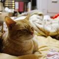 写真: 2008年12月05日の茶トラのボクチン(4歳)