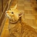写真: 2011年01月02日の茶トラのボクちん(6歳)