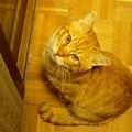 写真: 2011年01月02日のボクチン(6歳)