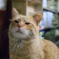 写真: 2009年02月09日の茶トラのボクチン(4歳)