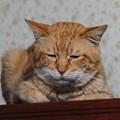 写真: 2011年02月22日の茶トラのボクチン(6歳)