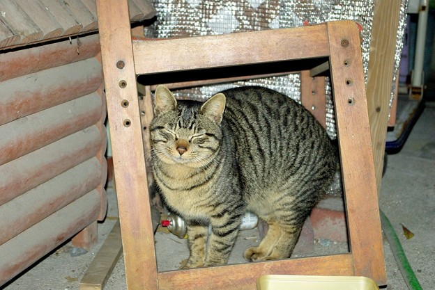 2018年1月15日の可愛い迷い猫