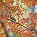 写真: 余りに名残紅葉が美しかったので^^