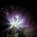 花は夜ひらく~