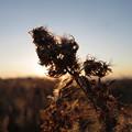 写真: 冬の野道