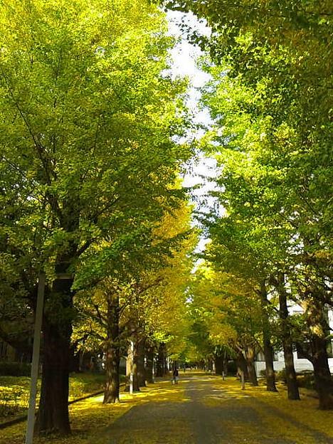 朝晩冷えるようになりまして、樹々も彩りはじめましたね。