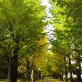 写真: 朝晩冷えるようになりまして、樹々も彩りはじめましたね。